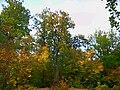 - panoramio (7064).jpg