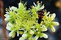 014479 - Flor e insecto - Flickr - M.Peinado.jpg