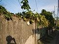 0169jfSabang Chapels Caingin Pantubig San Rafael Plants Bulacanfvf 26.JPG
