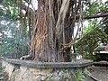 02993jfMowelfund Plaza Museum Film Institute Zamboanga Quezon Cityfvf 03.jpg