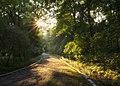 05-241-5006 Verkhivka park SAM 5507.jpg
