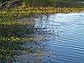09 Bennetts Point RD Green Pond SC 6836 (12397460643).jpg