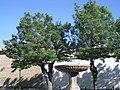 146 Plaza de San Pedro, font entre els arbres.jpg