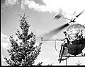 1966. Helicopter hovers next to the top of a tall Douglas-fir tree while a branchlet is clipped with the newly developed tree pruner to sample foliage. (34481675923).jpg
