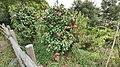 1 Chome Midori, Abiko-shi, Chiba-ken 270-1153, Japan - panoramio (13).jpg
