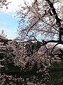 1 Kitanomarukōen, Chiyoda-ku, Tōkyō-to 102-0091, Japan - panoramio.jpg