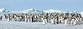 2007 Snow-Hill-Island Luyten-De-Hauwere-Emperor-Penguin-19.jpg