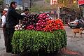 2008 Veg Cairo 3118895010.jpg