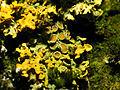2013-01-31 15-26-27-lichens.jpg