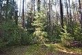 2015 13 Национальный парк Мещёрский.jpg