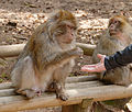2016-04-21 13-42-33 montagne-des-singes.jpg