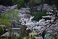 20160403 Himeji-Castle 3355 (26826009775).jpg