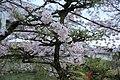 20160403 Himeji-Castle 3413 (26791735096).jpg