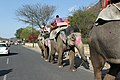 2017-03-05 153211 Elephant at Amber Fort anagoria.JPG