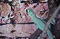 2019. Крокодиловый каньон в Ейске 080.jpg