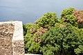57025 Piombino, Province of Livorno, Italy - panoramio - Rafał Klisowski (11).jpg