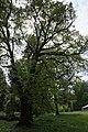 68-258-5008 Лугівський парк.jpg
