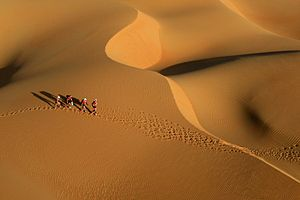 Abu Dhabi Adventure Challenge - In 2010 a record-breaking 50 teams from 20 nations will head into the vast Empty Quarter desert