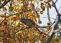 AS-SK-Bird.jpg