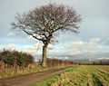 A blustery day in mid January - geograph.org.uk - 1127133.jpg