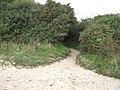 A path through the bushes - geograph.org.uk - 2121796.jpg