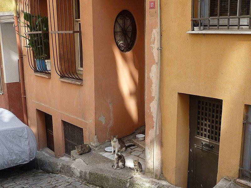 File:A street in Phanar - P1030379.JPG
