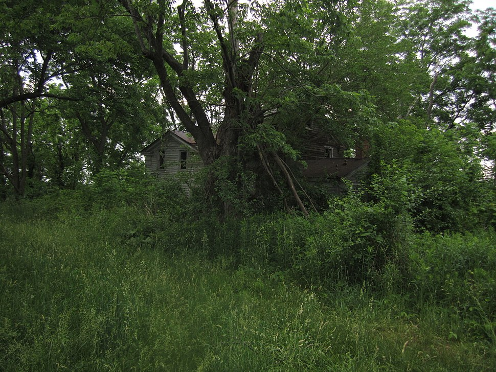 Abandoned farmhouse, overgrown