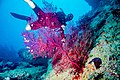 Abrolhos Marine National ParkRobertoCostaPinto26.jpg
