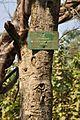Acharya Jagadish Chandra Bose Indian Botanic Garden - Howrah 2011-01-08 9875.JPG