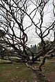 Acharya Jagadish Chandra Bose Indian Botanic Garden - Howrah 2011-02-20 1558.JPG