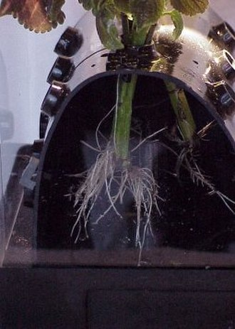 Aeroponics - Close-up of the first patented aeroponic plant support structure (1983). Its unrestricted support of the plant allows for normal growth in the air/moisture environment, and is still in use today.