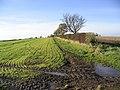 Agricultural landscape - geograph.org.uk - 281375.jpg