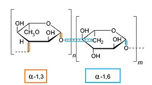 Chemical specificity - Sugars containing alpha-glycosidic linkages
