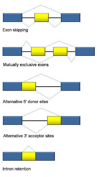 Alternative splicing - Traditional classification of basic types of alternative RNA splicing events.