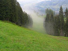 Immagine estiva di una pista di discesa libera: la Streif di Kitzbühel, in Austria