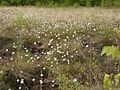 Am-Freistaetter-Moor suedliches-Wietingsmoor p1180467.jpg