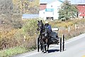Amish buggy on NY 39, Perrysburg, New York, October 2012 (02).jpg