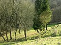 An almost dry valley near Castle Combe - geograph.org.uk - 1210726.jpg