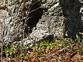 An der Felswand - panoramio.jpg