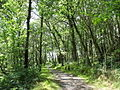 Ancient woodlands - geograph.org.uk - 511677.jpg