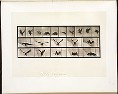 Animal locomotion. Plate 769 (Boston Public Library).jpg