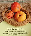Apfel 054 Goldparmaene (fcm).jpg