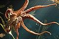Aquarium (4476712039).jpg