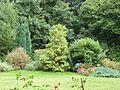Arbres et arbustes au château de la Houssaye (Quessoy).jpg