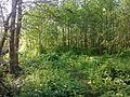 Arbres et arbustes non-identifiés à Grez-Doiceau 002.jpg
