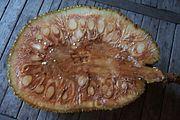 fruta da jaca