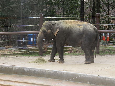 elephant in an enclosure