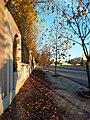 Autaumn leaves.jpg
