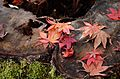 Autumn foliage 2012 (8252556271).jpg