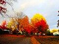 Autumn in Madison - panoramio (16).jpg